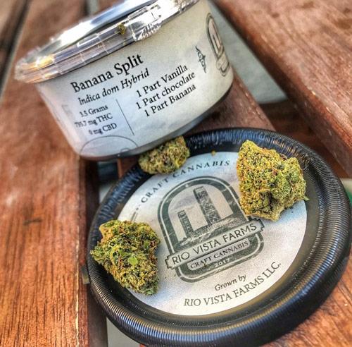 cbd-cannabis-indica